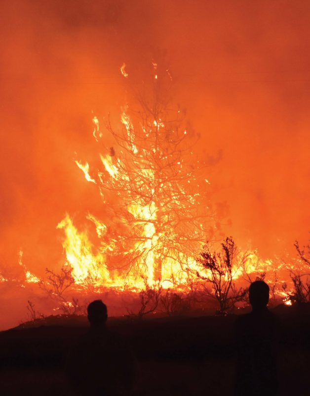 A tree is engulfed in flames while two people look on.